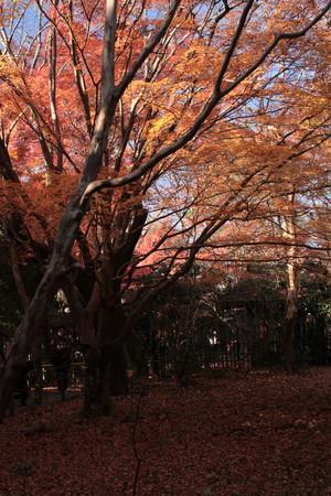 蓮花寺3(縦)