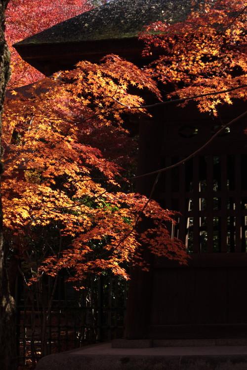 蓮花寺8(縦)