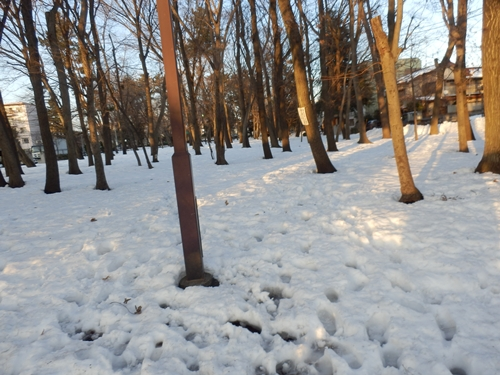 雪の日散歩8