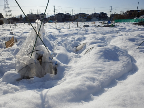 2雪の畑6