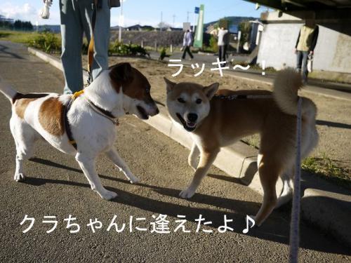 くらちゃんと散歩1