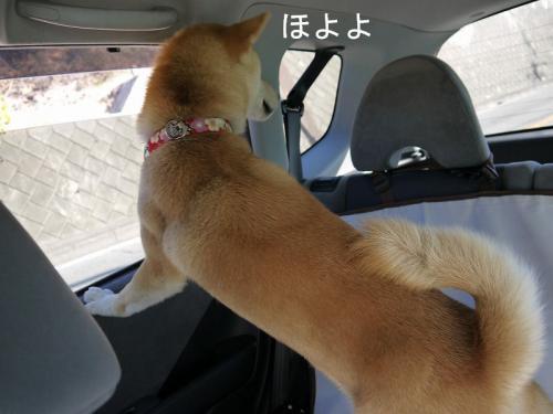 車内での儀式4