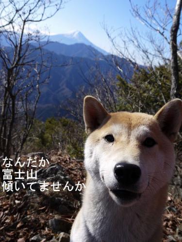 さくらと富士山