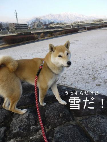 散歩・雪1