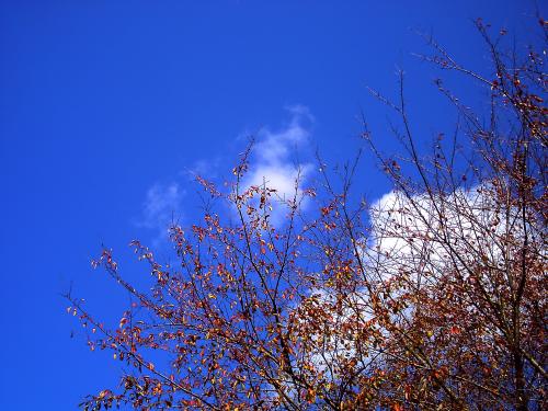 気持ち良い青空・・・ちょっと寒いけど