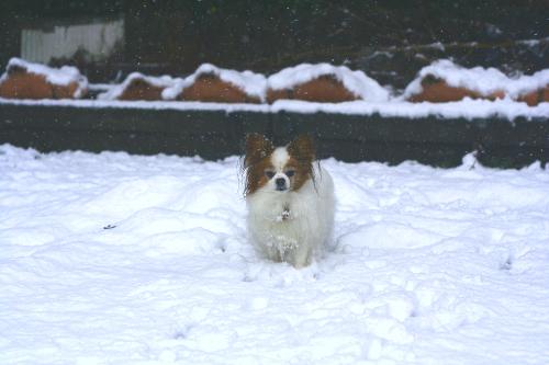 恒例の雪合戦