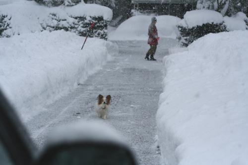 実家の除雪は、こんな様子・・・