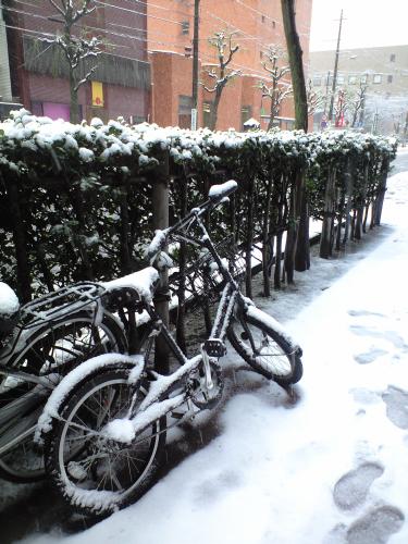 どちらさまの自転車が存じませんがご愁傷さまです。でも雪に埋もれた自転車って絵になりますよね。遭遇すると絶対写真に撮りたくなるのは私だけ?