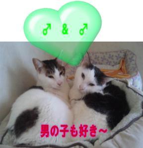 image_20120207155622.jpg
