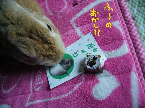 11,うさフェスじぇふ(1)