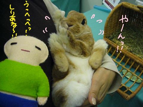 11,うさフェスらむ(2)