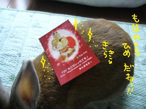 11,うさフェスまるくる(1)