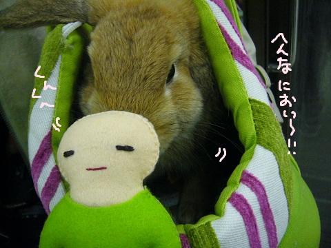 11,うさフェスみう(5)