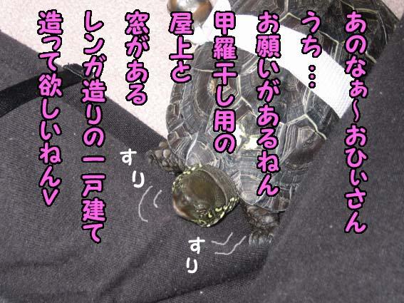 onedari1.jpg