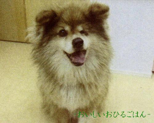 momokoIMG_0001_3_20110325230838_20110920011304.jpg