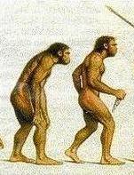 人類進化図