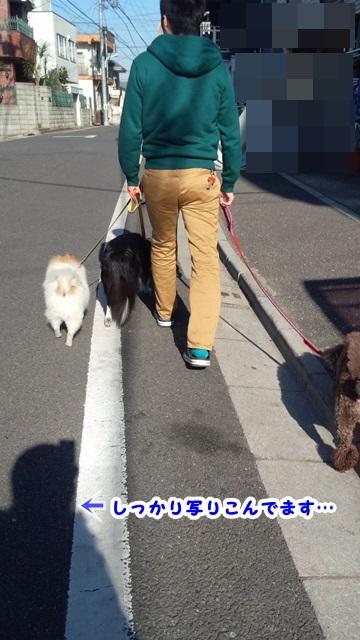 お散歩行ってた?2
