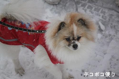 雪の中の散歩1