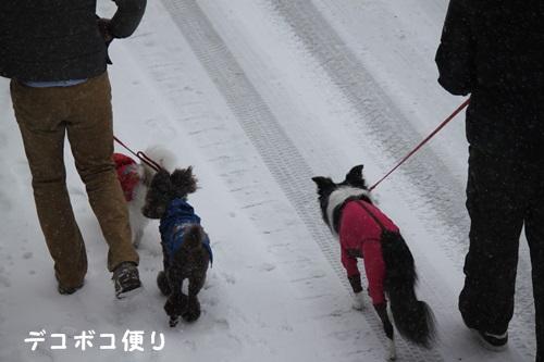 雪の中の散歩2