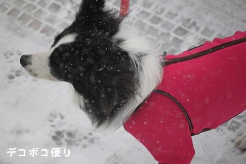 雪の中の散歩3