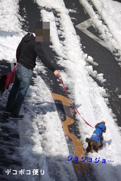 雪の中の散歩5