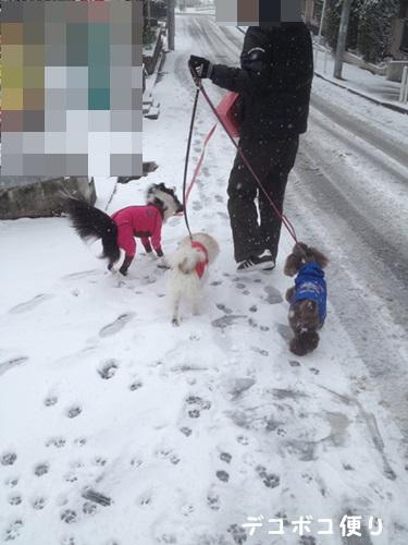 雪の中の散歩9