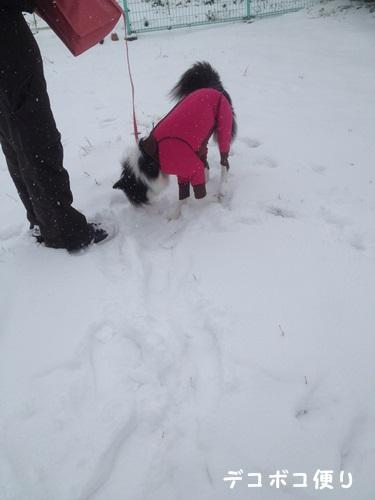 雪の中の散歩10