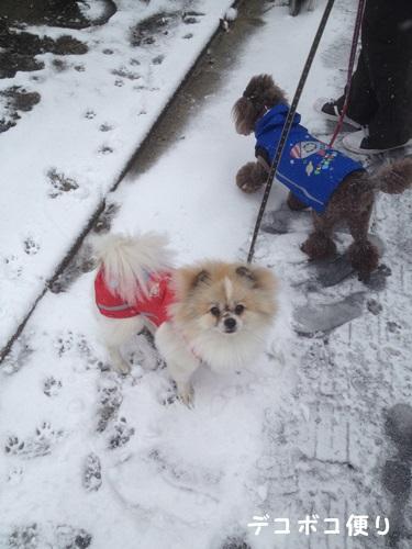 雪の中の散歩11
