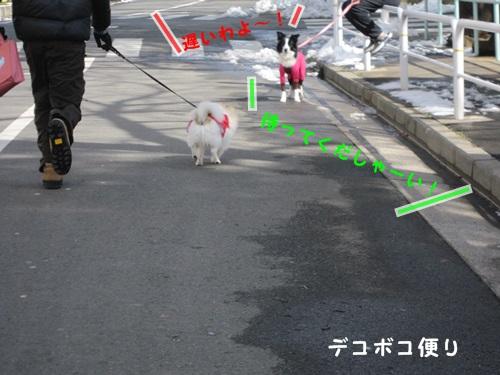 みんなでお散歩9