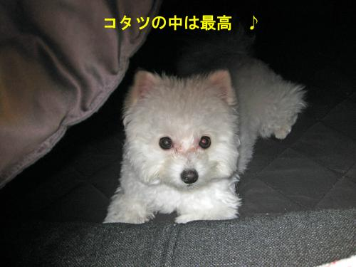 コタツの中_convert_20120109023151