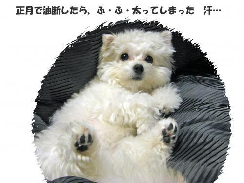 太った_convert_20120109111304