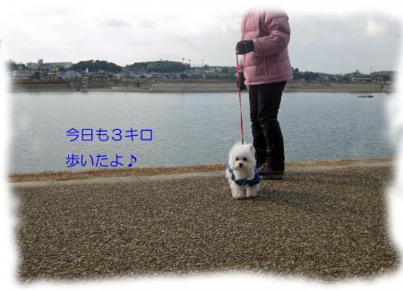 3キロ歩いたよ_convert_20120212212121
