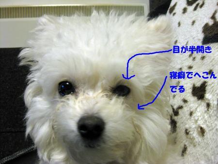 寝癖_convert_20120219233659