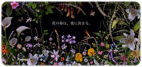 sayomaru3-3.jpg
