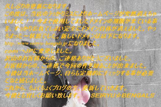 044_20111212113030.jpg