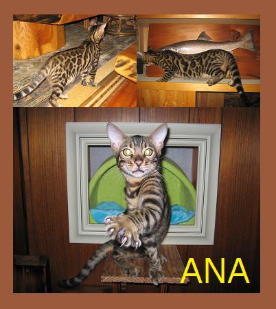 ANA.jpg