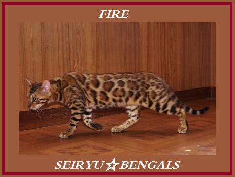 FIRE_20111224014937.jpg