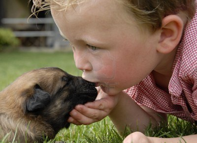 3076816-little-boy-kissing-his-very-young-puppy-purebred-belgian-shepherd-malinois.jpg