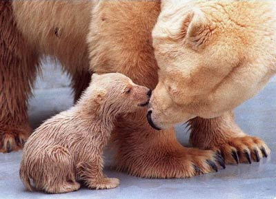 Polar-bear-Animals-Kiss.jpg