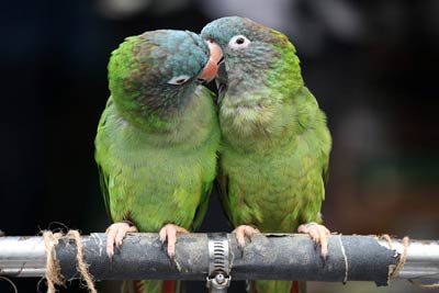 animal-KIss-Parrots-4.jpg