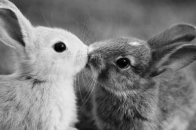 kiss005