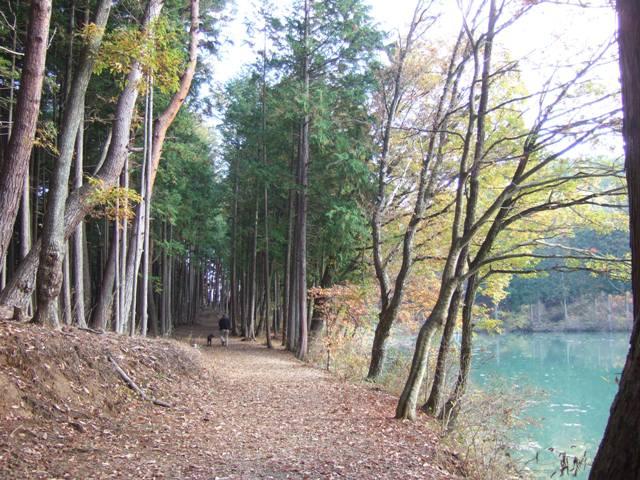 杉の並木道で散歩