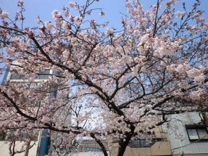 千林公園 桜-5