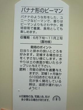 P1070723.jpg