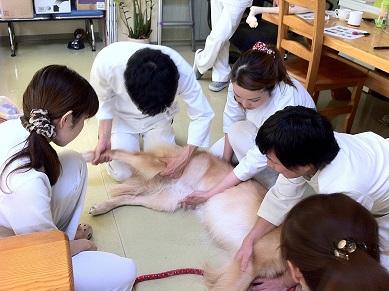 身体検査実習