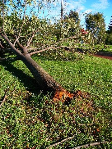 2011-09-22 台風一過の朝 126