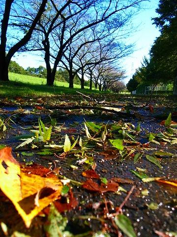 2011-09-22 台風一過の朝 170