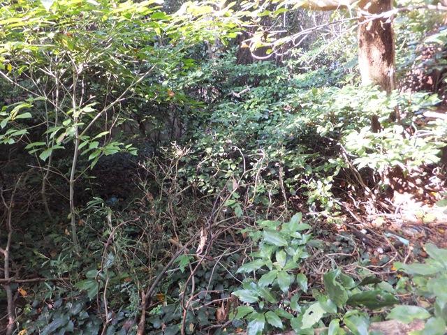 藪に埋もれている砲座