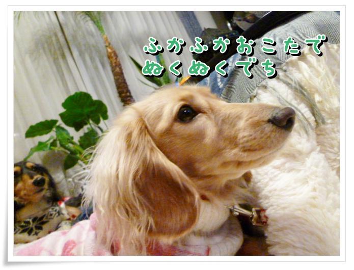 11_20120106152331.jpg