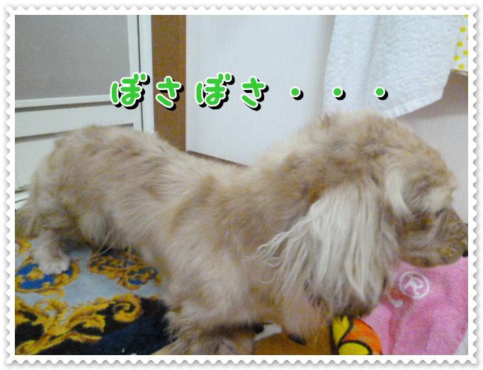 11_20120319105436.jpg